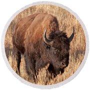 Bull Bison Running In Yellowstone National Park Round Beach Towel