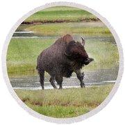 Bull Bison Shaking In Yellowstone National Park Round Beach Towel