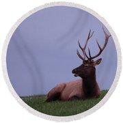 Bull Elk At Dusk Round Beach Towel