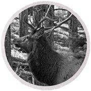 Bull Elk Bw Round Beach Towel
