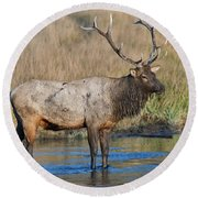 Bull Elk Crossing River Round Beach Towel