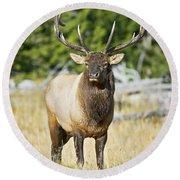Bull Elk IIII Round Beach Towel