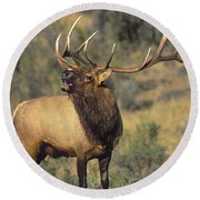 Bull Elk In Rut Bugling Yellowstone Wyoming Wildlife Round Beach Towel