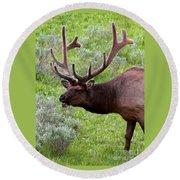 Bull Elk In Yellowstone Round Beach Towel