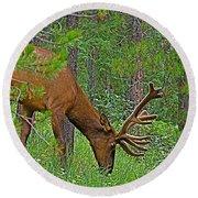 Bull Elk Near Maligne Canyon In Jasper Np-alberta Round Beach Towel