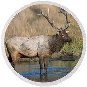 Bull Elk On The Madison River Round Beach Towel