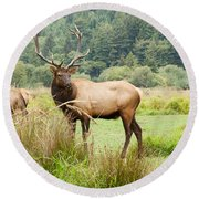 Bull Elk On Watch Round Beach Towel
