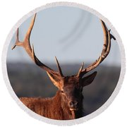 Bull Elk Portrait Round Beach Towel