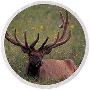 Bull Elk Resting Round Beach Towel