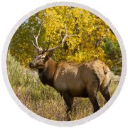 Bull Elk With Autumn Colors Round Beach Towel