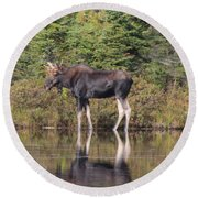 Bull Moose 3 Round Beach Towel