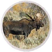 Bull Moose Round Beach Towel