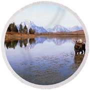 Bull Moose Grand Teton National Park Wy Round Beach Towel