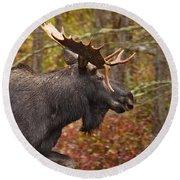 Bull Moose II Round Beach Towel