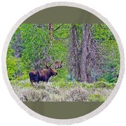 Bull Moose In Gros Ventre Campground In Grand Tetons National Park-wyoming Round Beach Towel