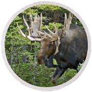 Bull Moose Shedding Velvet Round Beach Towel
