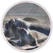 Bull Seal Round Beach Towel