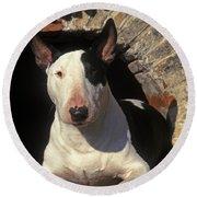 Bull Terrier Dog Round Beach Towel