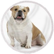 Bulldog, Female Round Beach Towel