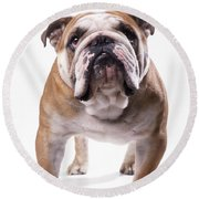 Bulldog Standing, Facing Camera Round Beach Towel