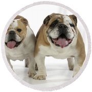Bulldogs, Male And Female Round Beach Towel