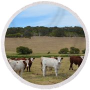 Bulls And Cow Round Beach Towel