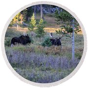 Bulls In The Meadow Round Beach Towel