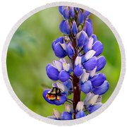 Bumble Bee And Lupine Round Beach Towel