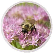 Bumble Bee On A Century Plant Round Beach Towel