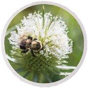 Bumble Bee On Button Bush Flower Round Beach Towel