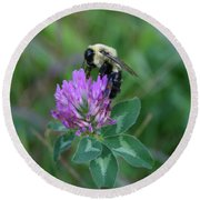 Bumble Bee On Red Clover  Round Beach Towel