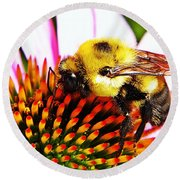 Bumblebee On Echinacea  Round Beach Towel