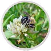 Bumblebee On White Clover Round Beach Towel