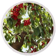 Bumper Crop - Cherries Round Beach Towel