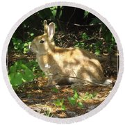 Bunny In The Wild 2 Round Beach Towel