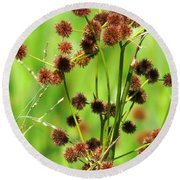 Bur-reed Round Beach Towel