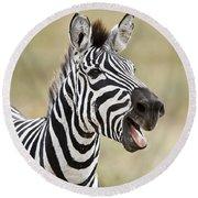 Burchells Zebra Equus Quagga Burchellii Round Beach Towel