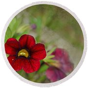 Burgundy Calibrochoa Blank Greeting Card Round Beach Towel