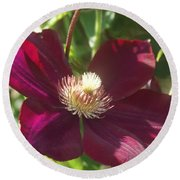 Burgundy Clematis Profile   # Round Beach Towel