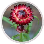 Burgundy Straw Flower Round Beach Towel