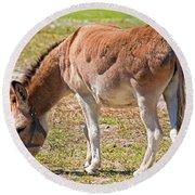Burro Equus Asinus Round Beach Towel