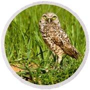 Burrowing Owl At It's Burrow Round Beach Towel