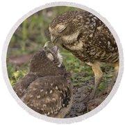 Burrowing Owl Feeding It's Chick Photo Round Beach Towel