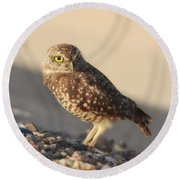 Burrowing Owl II Round Beach Towel