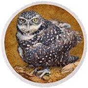Burrowing Owl Portrait Round Beach Towel