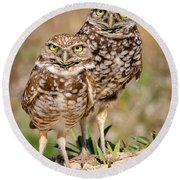 Burrowing Owls Round Beach Towel