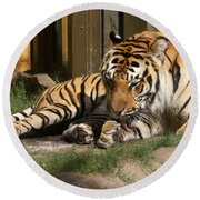 Busch Tiger Round Beach Towel