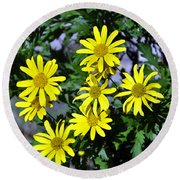 Bush Daisy  Round Beach Towel