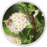 Busy As A Bee Round Beach Towel