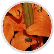 Busy Bee - 774 Round Beach Towel
